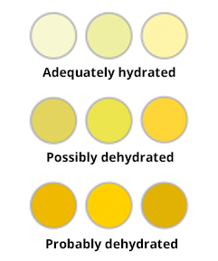 Dehydration levels graph