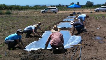 Researchers putting down clear plastic tarp on soil for WCAHS funded biosolarization project.