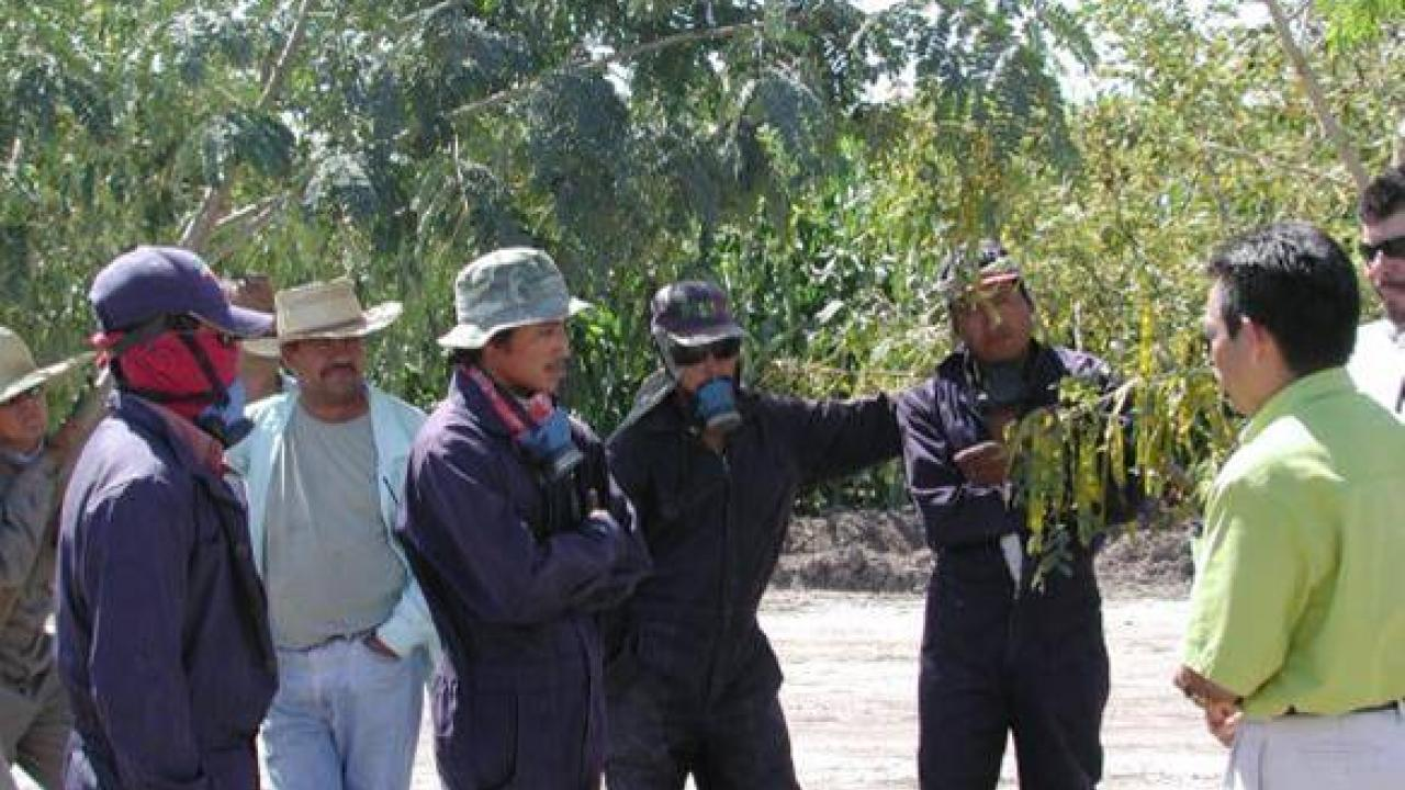 Farmworkers wearing jumpsuits and respirators stand in orchard and listen to a safety briefing