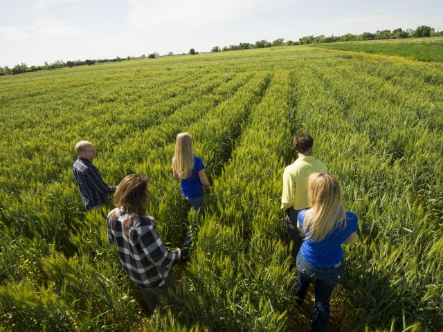 students in wheat field
