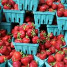 Strawberries in blue paper pint containers arranged for sale